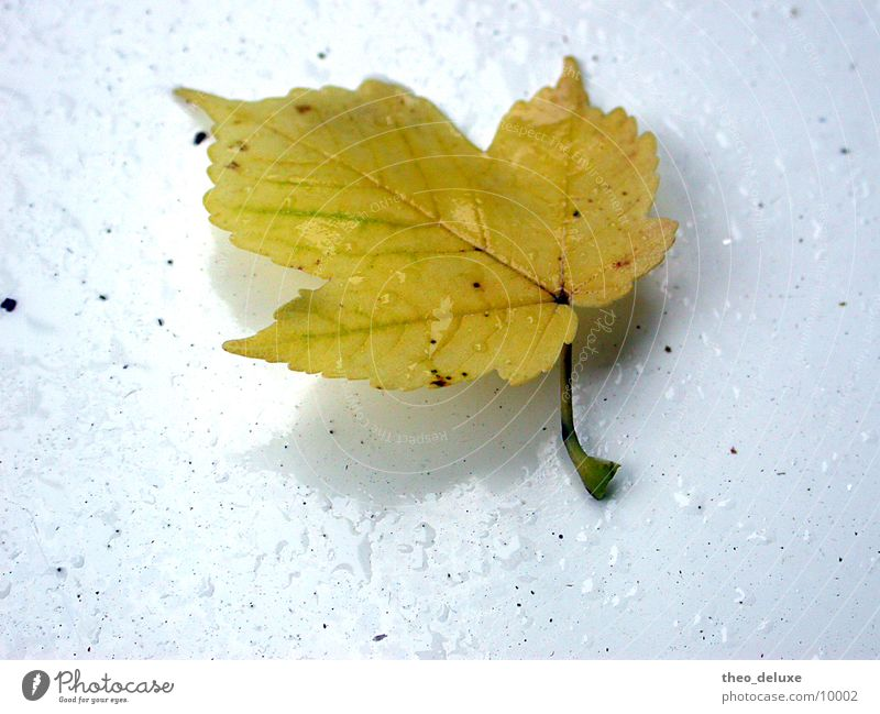 Water White Leaf Rain Drops of water Wet Surface