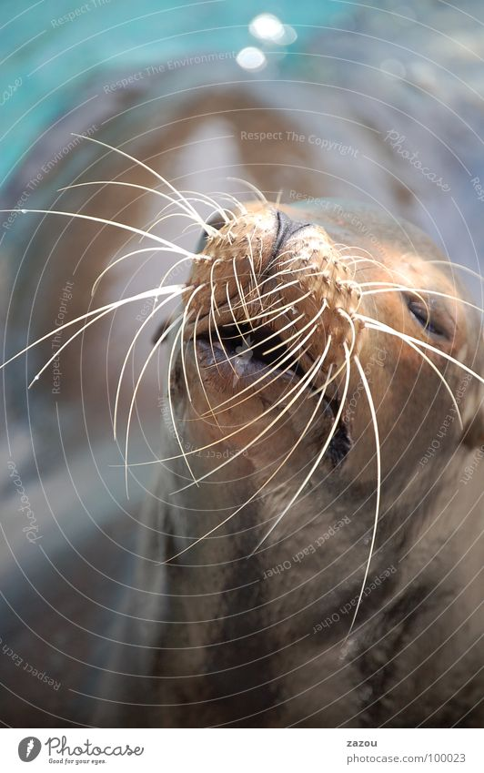 summer heat Colour photo Well-being Relaxation Sunbathing Ocean Animal Wild animal 1 Break Seals Harbour seal Sea lion Florida Mammal