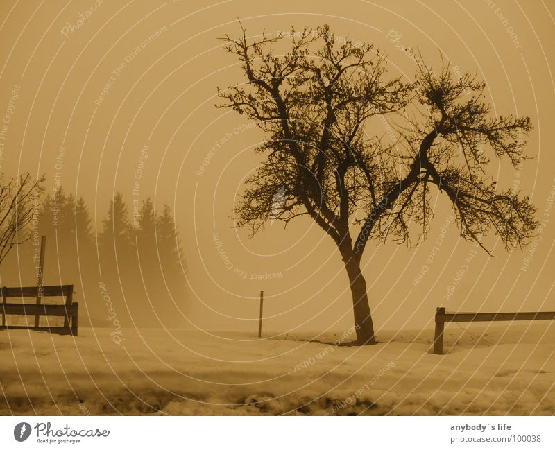 Tree Winter Calm Loneliness Forest Cold Think Grief Distress