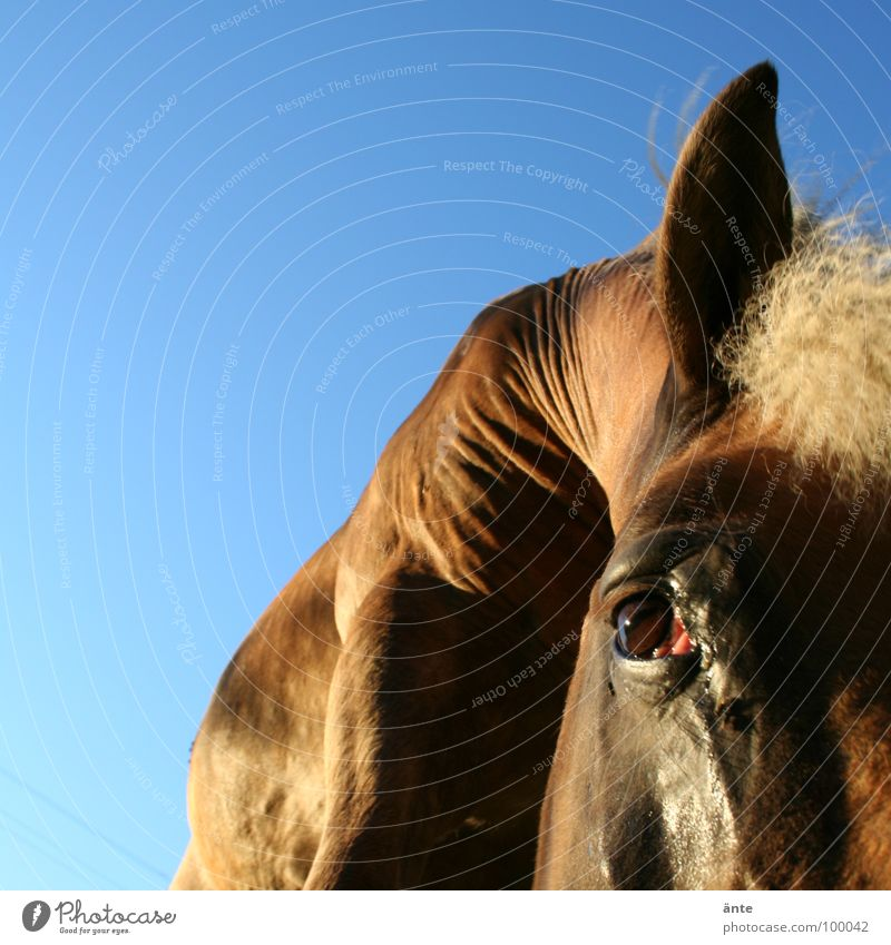 Summer Animal Eyes Sadness Power Flying Large Might Horse Grief Ear Pelt Near Wrinkles Watchfulness Mammal