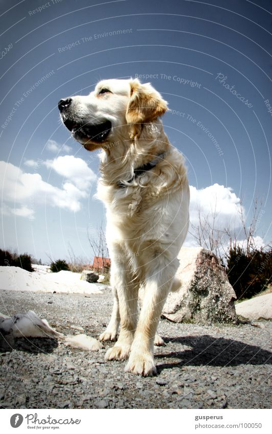 Nature Beautiful Freedom Dog Pelt Mammal Animal Majesty