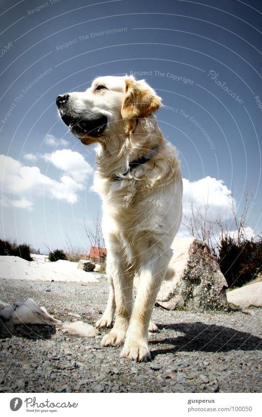 Nature Beautiful Freedom Dog Free Pelt Mammal Animal Majesty