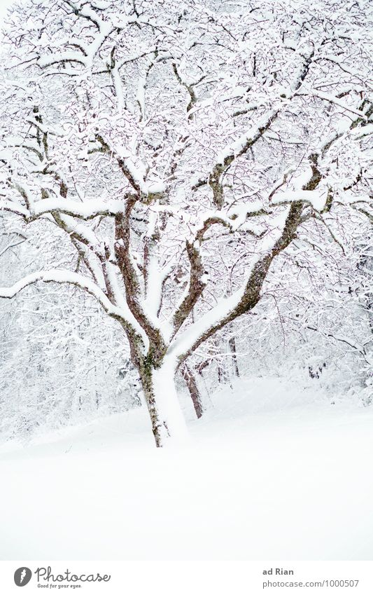 Nature Old Plant Tree Animal Winter Forest Cold Environment Snow Park Snowfall Ice Field Idyll Esthetic