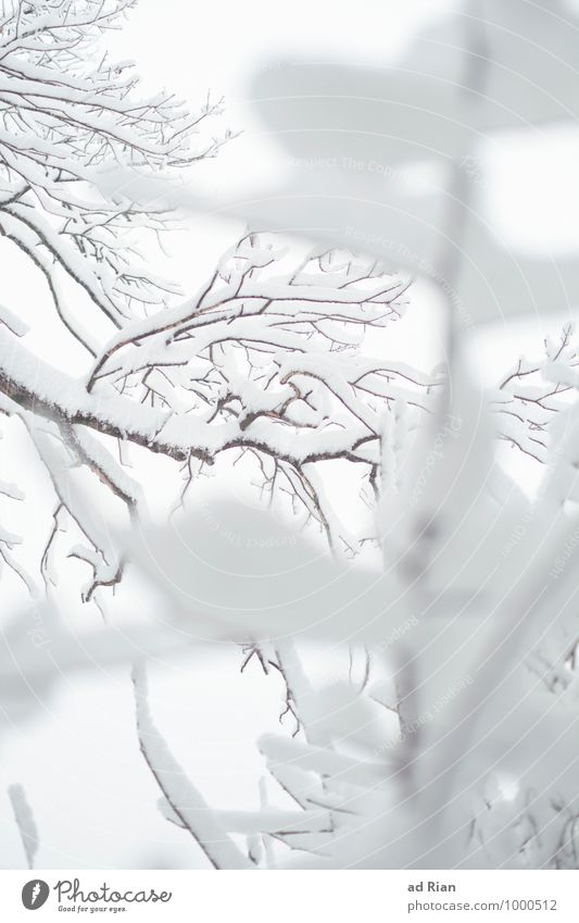 snowlines Environment Nature Plant Animal Winter Fog Ice Frost Snow Snowfall Tree Bushes Foliage plant Park Forest Esthetic Elegant Calm Stagnating Cold
