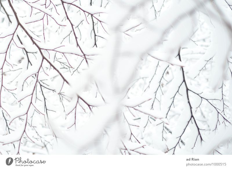 dancing with the white Environment Nature Animal Winter Bad weather Ice Frost Snow Snowfall Plant Tree Foliage plant Branch Park Forest Esthetic Contentment