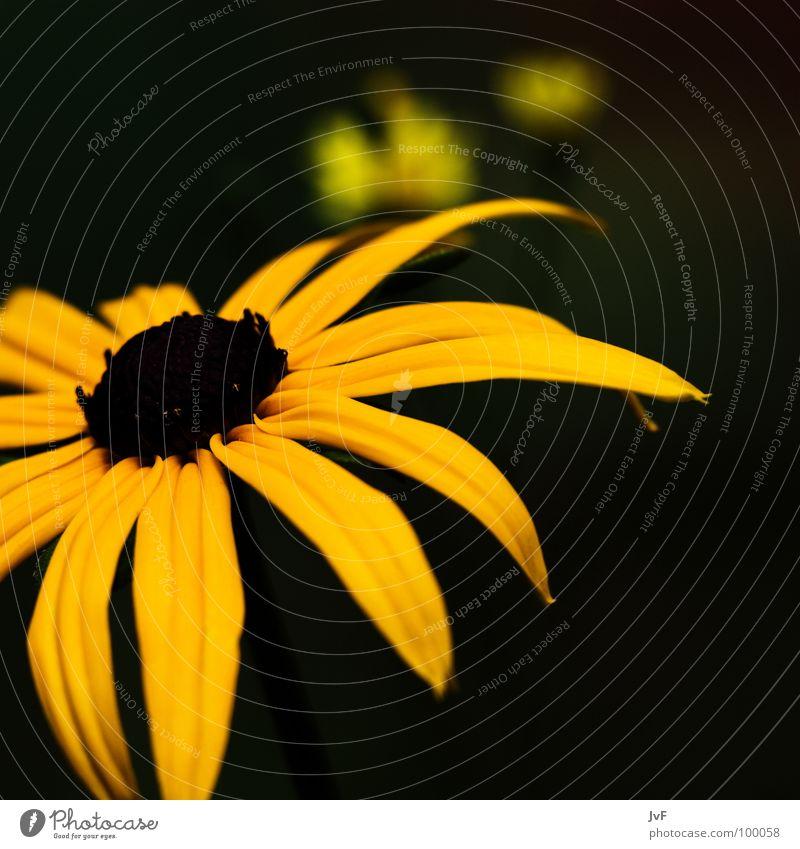 Nature Beautiful Flower Yellow Spring Garden Growth