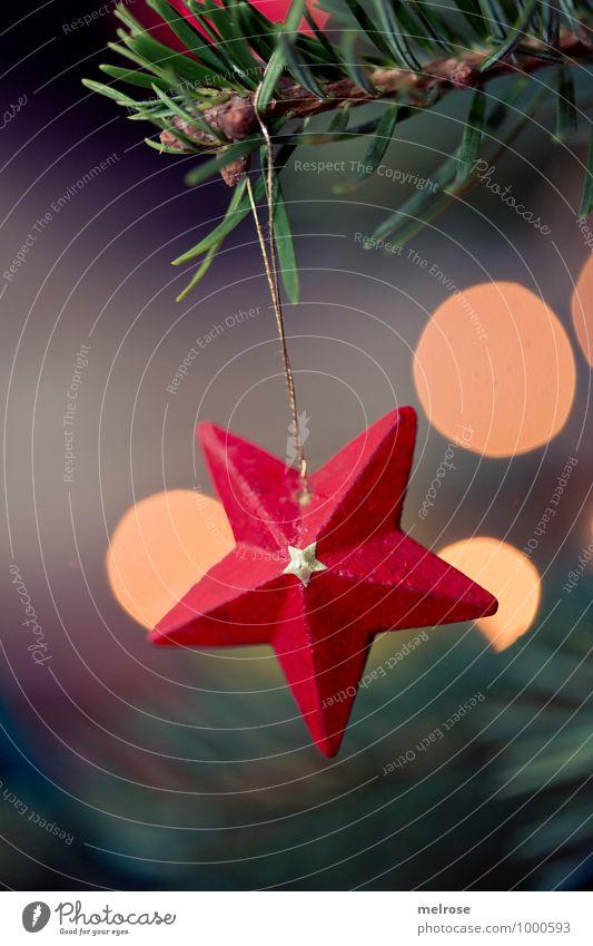red star Winter Star (Symbol) Fir branch christmas tree Blur Light (Natural Phenomenon) Glittering wooden star Feasts & Celebrations Hang Illuminate Elegant