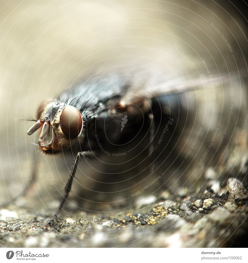 Eyes Legs Fear Fly Flying Round Wing Insect Creepy Direct Depth of field Evil Feeler Vaulting Compound eye