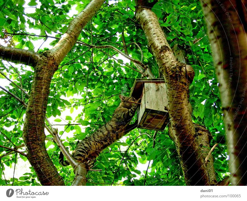Tree Cat Bird Climbing Curiosity Mammal Visit Birdhouse Acrobatic