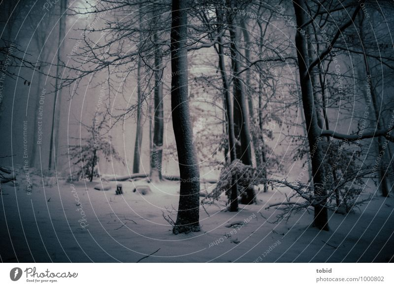 Mystical Nature Landscape Plant Winter Bad weather Storm Wind Ice Frost Snow Tree Forest Threat Dark Cold Blue Gray Black Loneliness Apocalyptic sentiment