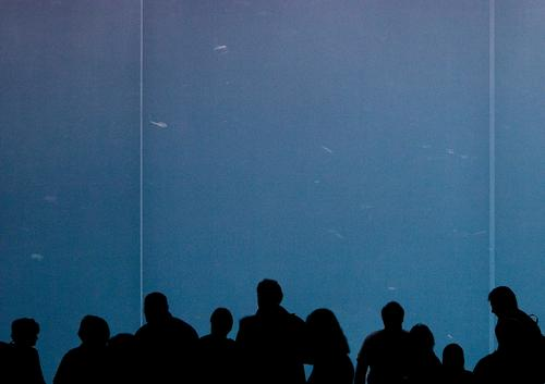 Watch fish Aquarium Window Animal Zoo Human being Audience Looking Dark Silhouette Crowd of people Free space Places Comforting Relaxation Calm Group Fish