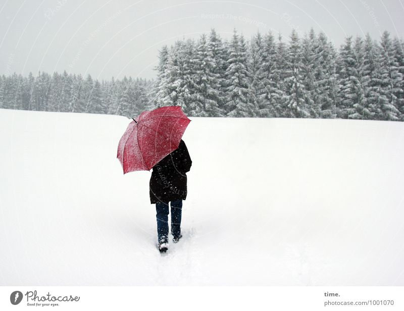 Human being Tree Winter Forest Life Movement Meadow Snow Lanes & trails Going Snowfall Hiking Esthetic Wet To enjoy Protection