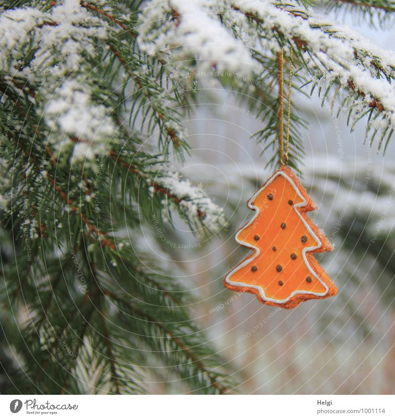 oh tannenbaum... Christmas & Advent Environment Nature Plant Winter Snow Tree Spruce Fir tree Twig Fir needle Forest Decoration Christmas tree Sign Hang