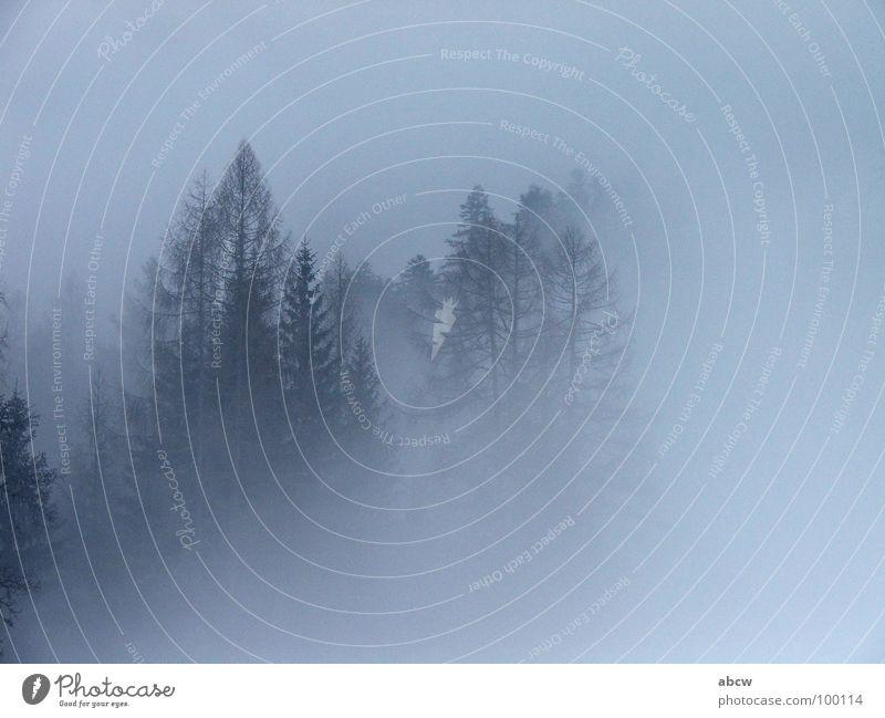 fog Fog Tree Forest Fir tree Austria Dreary Europe Weather Sadness