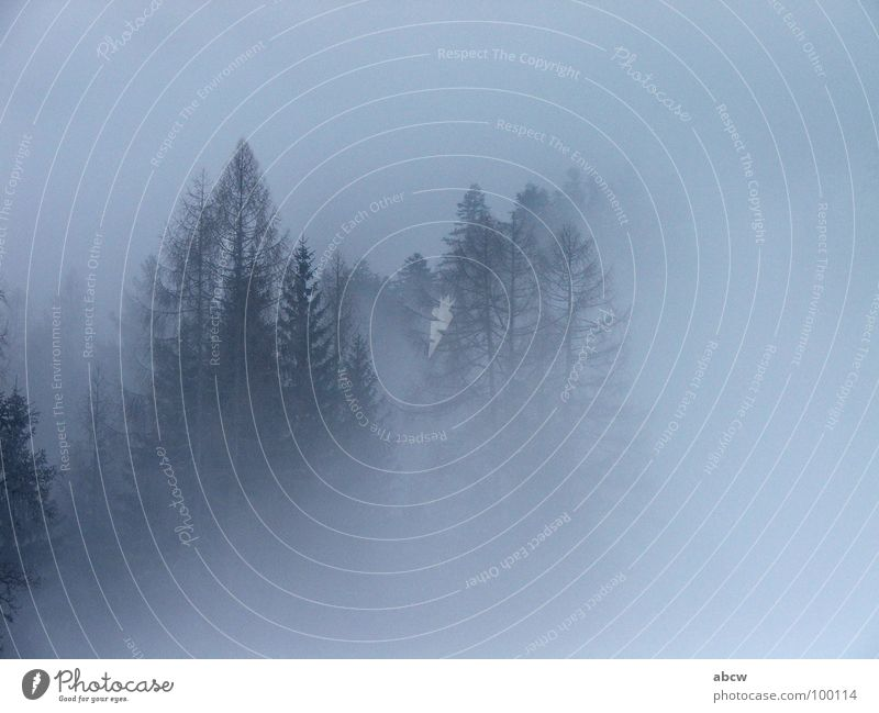 Tree Forest Sadness Fog Weather Europe Fir tree Austria Dreary