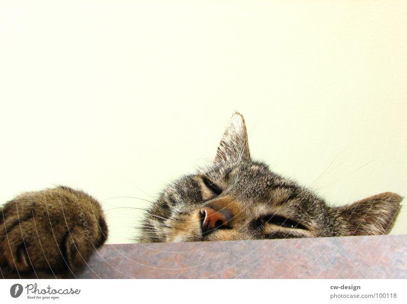 Animal Cat Nose Sweet Animal face Pelt Curiosity Brave Cute Appetite Mammal Paw Pet Brash Snout Isolated Image