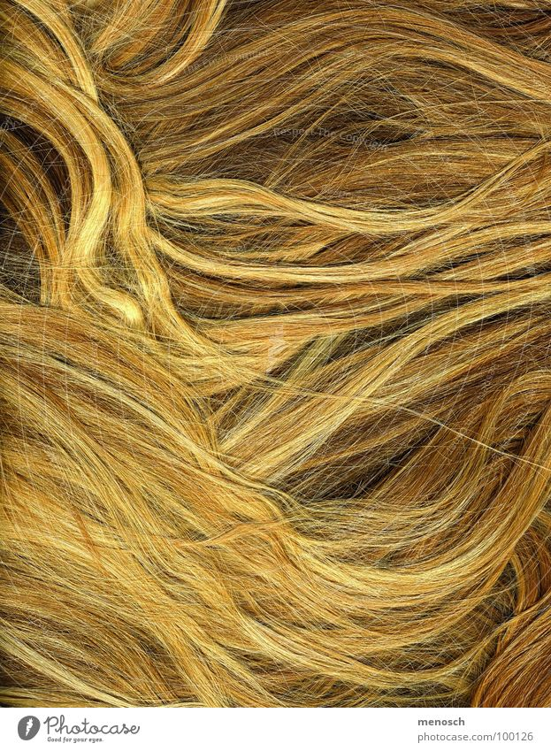 Human being Beautiful Yellow Hair and hairstyles Line Blonde Gold Hairdresser Long-haired Straw Comb Wavy line