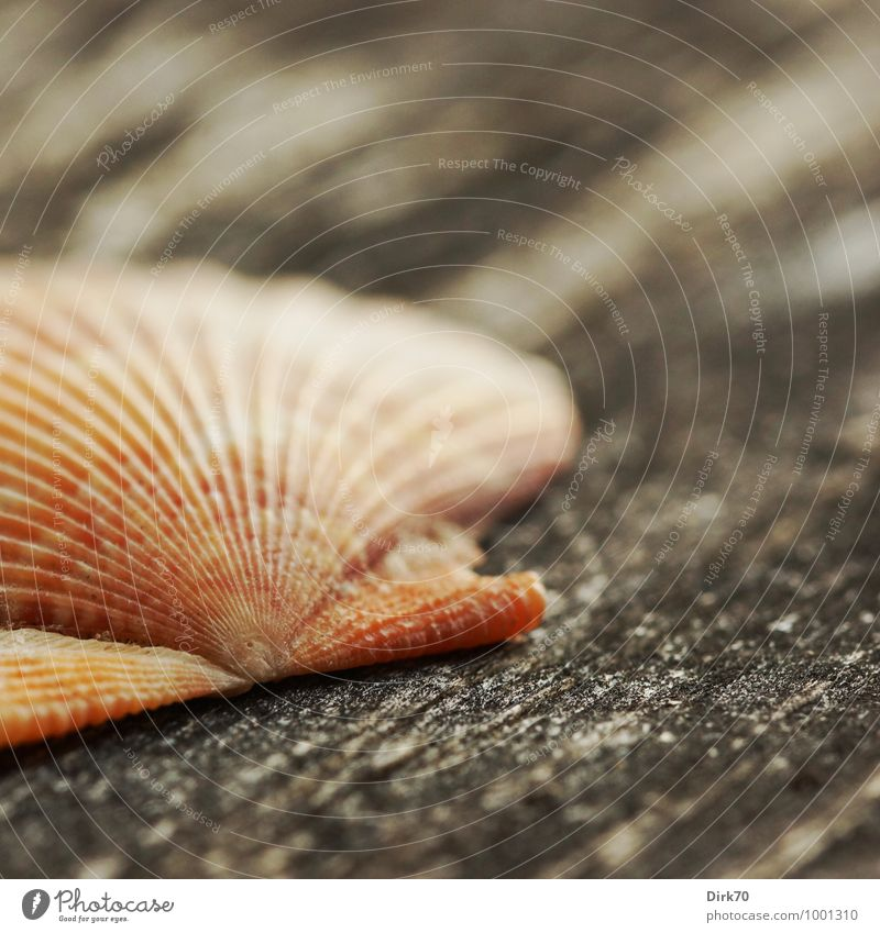 Word with three m Vacation & Travel Tourism Summer Summer vacation Beach Nature Animal Dead animal Mussel Shell-bearing mollusk Mussel shell Scallop 1 Souvenir
