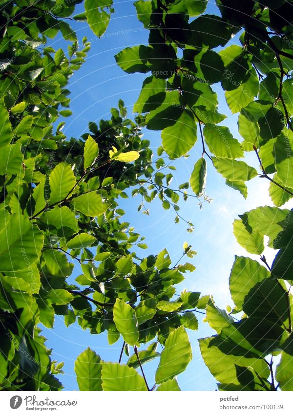 Nature Sky Tree Green Blue Plant Summer Leaf Wood Brown Leisure and hobbies Branch God Paradise Deities