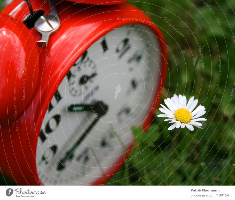 the flower of time Alarm clock Clock Time Grass Restless Red Green Daisy Flower Blossom Plant Summer Clock hand Digits and numbers Exterior shot