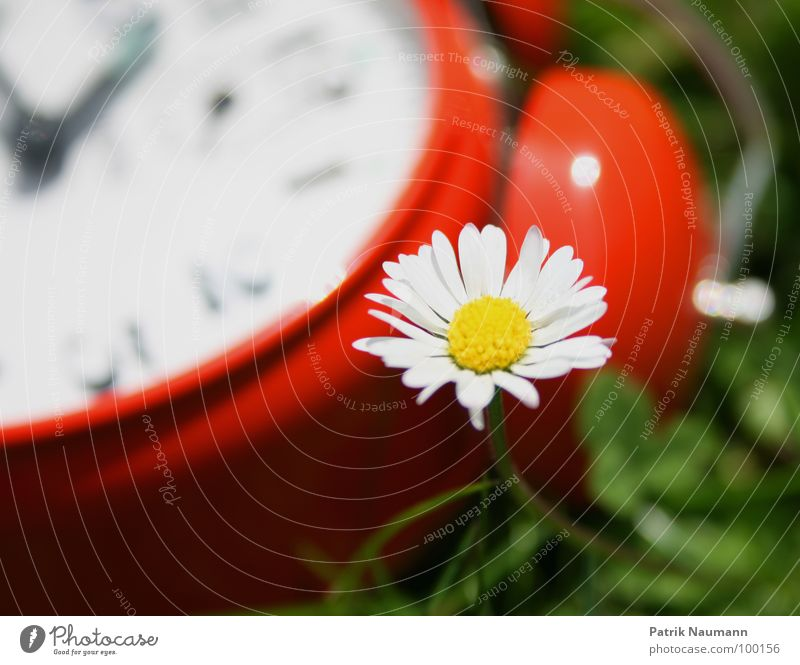 How much time do I have left? Alarm clock Clock Time Red Blur Daisy Blossom Flower Plant Green Grass Meadow Transience Summer Summery Spring Clock hand Detail