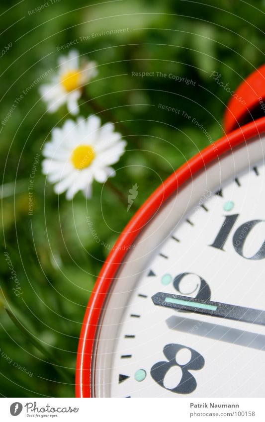 on the brink of... daisies Alarm clock Clock Time Digits and numbers 8 9 10 Transience Red Grass Green Flower Daisy Plant Blossom Blur Summer Spring Summery