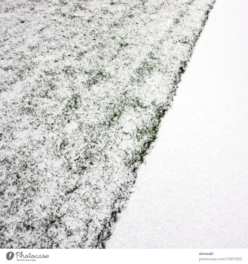 whiteout Elements Earth Ice Frost Snow Garden Meadow Cold White Colour photo Subdued colour Exterior shot Abstract Pattern Structures and shapes Copy Space left
