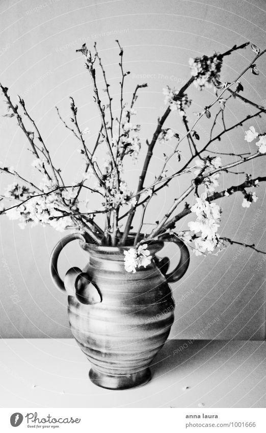 flower vase Nature Plant Spring Tree Flower Blossom Foliage plant Blossoming Fragrance Faded Growth Esthetic Fresh Natural Beautiful Feminine Black White Moody