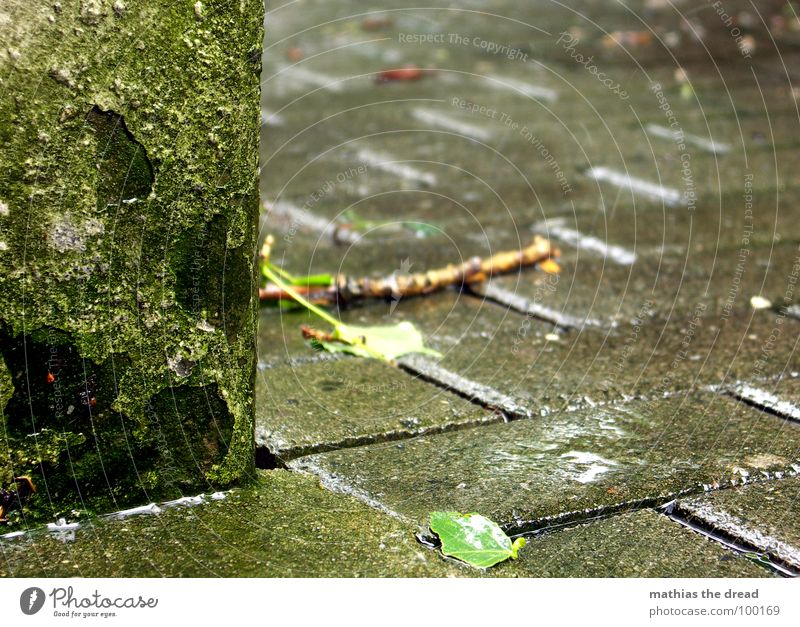 Water Green Cold Wall (building) Stone Rain Drops of water Wet Floor covering Putrefy Branch Thunder and lightning Damp Cobblestones Storm Stick