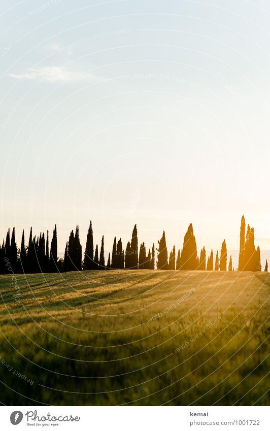 cypresses Vacation & Travel Tourism Trip Summer vacation Italy Chianti Tuscany Environment Nature Landscape Plant Sky Sun Sunrise Sunset Sunlight