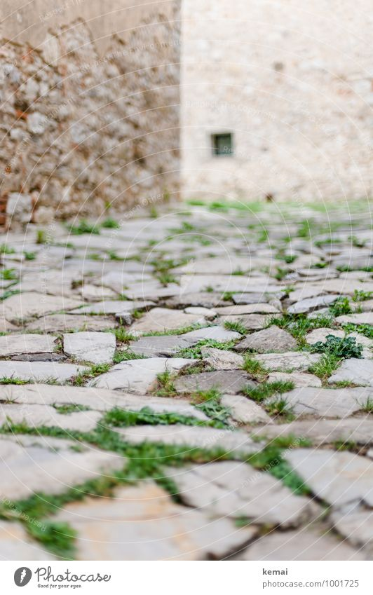 Stone by stone City trip Tuscany Italy Grass Town Old town Deserted House (Residential Structure) Manmade structures Building Wall (barrier) Wall (building)