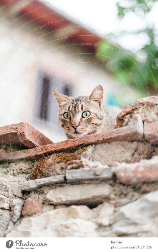 Woah - Photographers! Wall (barrier) Wall (building) Animal Pet Cat Animal face 1 Looking Sit Exceptional Large Bright Cute Emotions Surprise Threat