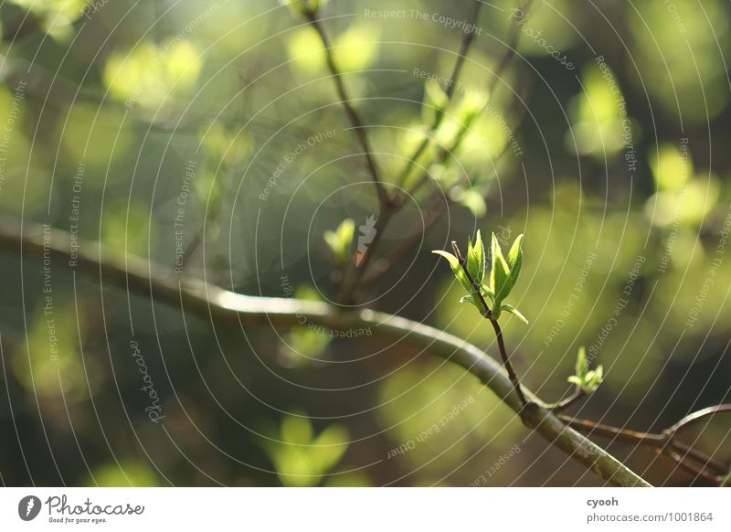 green. Nature Spring Beautiful weather Plant Tree Leaf Growth Fresh Bright New Warmth Soft Green Joy Happy Happiness Contentment Joie de vivre (Vitality)