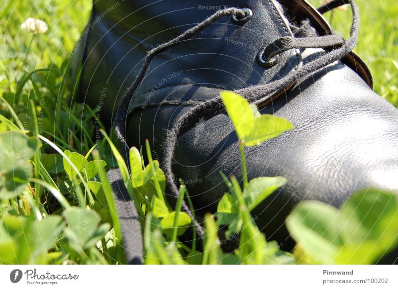 Joy Grass Freedom Bird Glittering Contentment Aviation Success Footwear Speed Dangerous Beautiful weather Rope String Search Thin