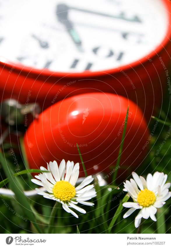 Nature Green Red Meadow Grass 2 Technology Clock Digits and numbers Time Daisy Alarm clock Technical Mechanics
