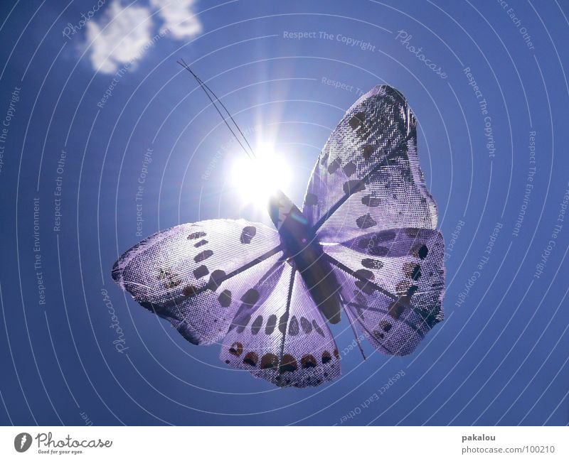 butterfly in the sun Butterfly Decoration Insect Clouds Sun Violet Feeler Summer Colour Sky Blue Free Wing experiential Flying plastic decoration