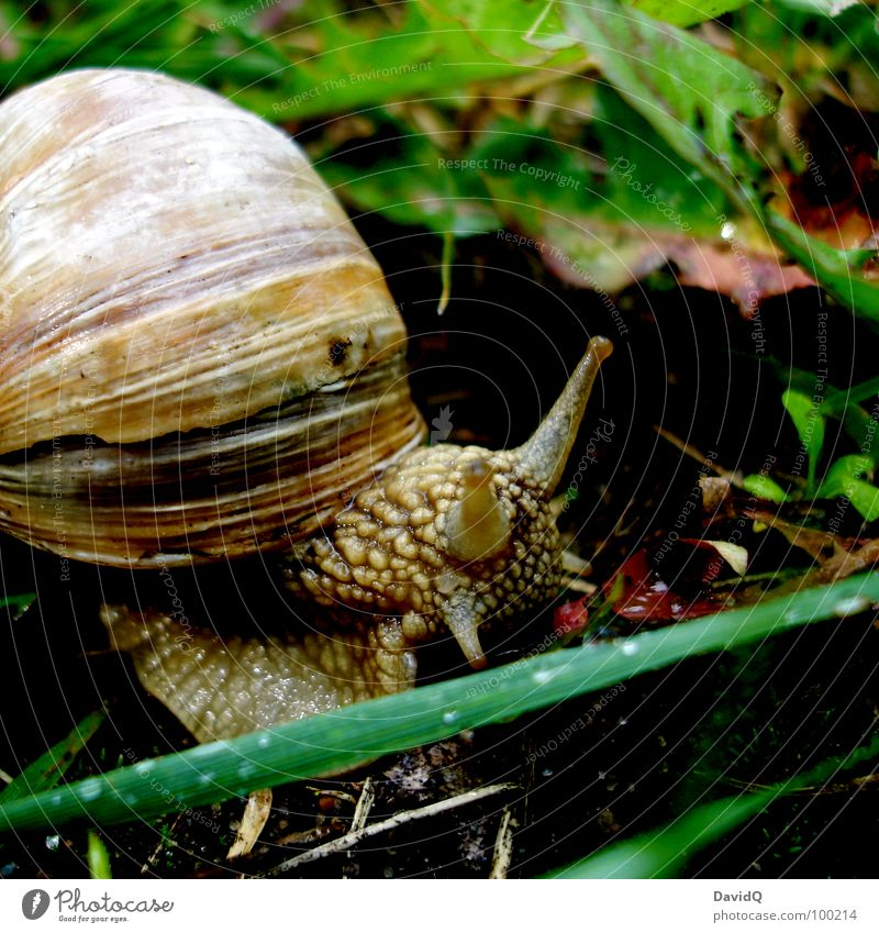 escargot Vineyard snail Snail shell Crawl Glide Mucus Gain favor Slowly Movement Slow motion Stagnating Leaf Blade of grass Grass Home country Green Summer