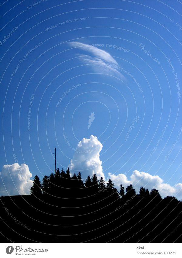 Sky Tree Blue Clouds Mountain Weather Gale Tree trunk Sky blue Cumulus Black Forest Freiburg im Breisgau Hurricane Schauinsland