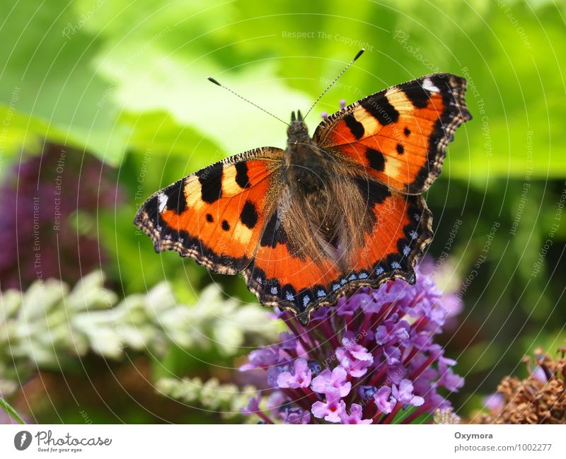 Nature Plant Beautiful Green Summer Relaxation Flower Calm Animal Garden Flying Brown Orange Field Wild animal Wing