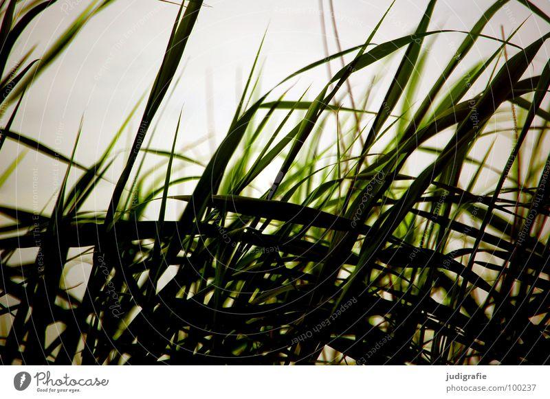 grass Grass Beach Back-light Lake Ocean Evening sun Light Green Stalk Blade of grass Wilderness Environment Plant Colour Coast Sand Wind Nature Line