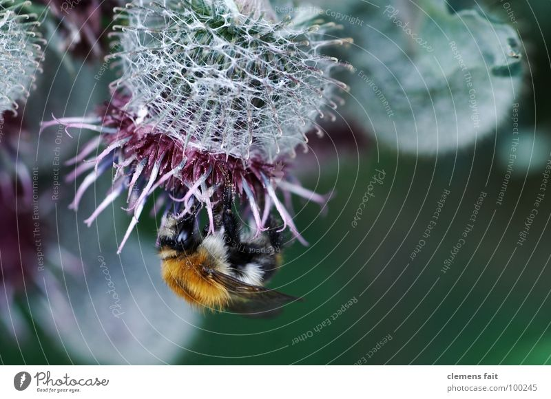 Blossom Insect Collection Dust Crawl Pollen Bumble bee Diligent Stamen Nectar
