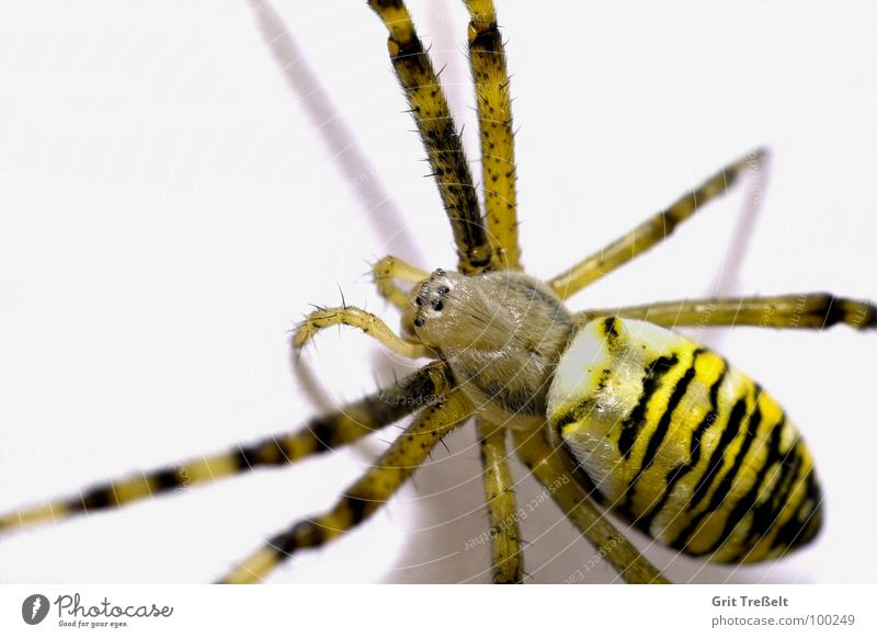 Eyes Small Fear Disgust Spider Black-and-yellow argiope