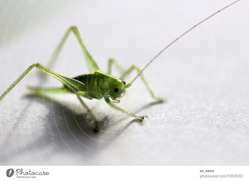 Green Colour Summer Animal Life Eyes Natural Spring Small Bright Legs Glittering Sit Fresh Esthetic Beginning