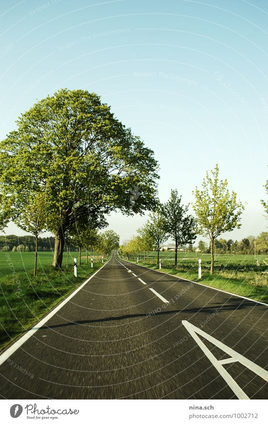 Country road / Speed / Spring Lifestyle Vacation & Travel Trip Adventure Far-off places Summer Summer vacation Sun Living or residing Nature Landscape