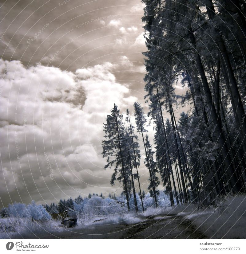 one step further... Infrared White Infrared color Passenger train Black Red Clouds Grass Wayside Meadow Wood flour Wood effect Gorgeous Exceptional Dream Fence