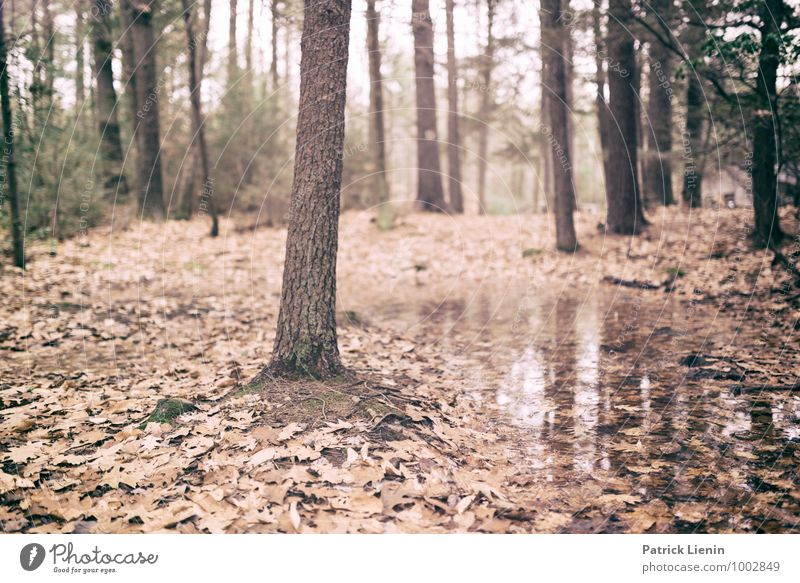Nature Plant Water Tree Relaxation Landscape Calm Far-off places Forest Environment Life Tourism Contentment Weather Earth Trip