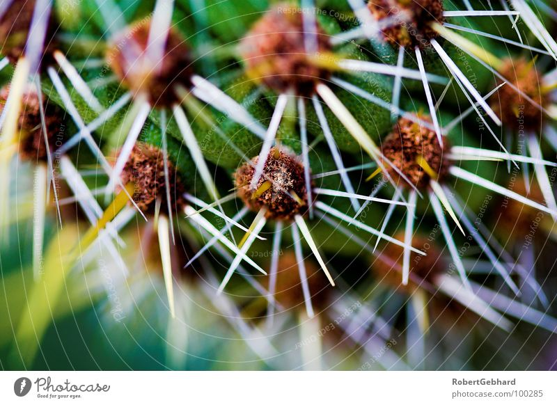 Green Plant Garden Park Star (Symbol) Dangerous Desert Point Pain Botany Depth of field Cactus Thorn Thorny Pierce