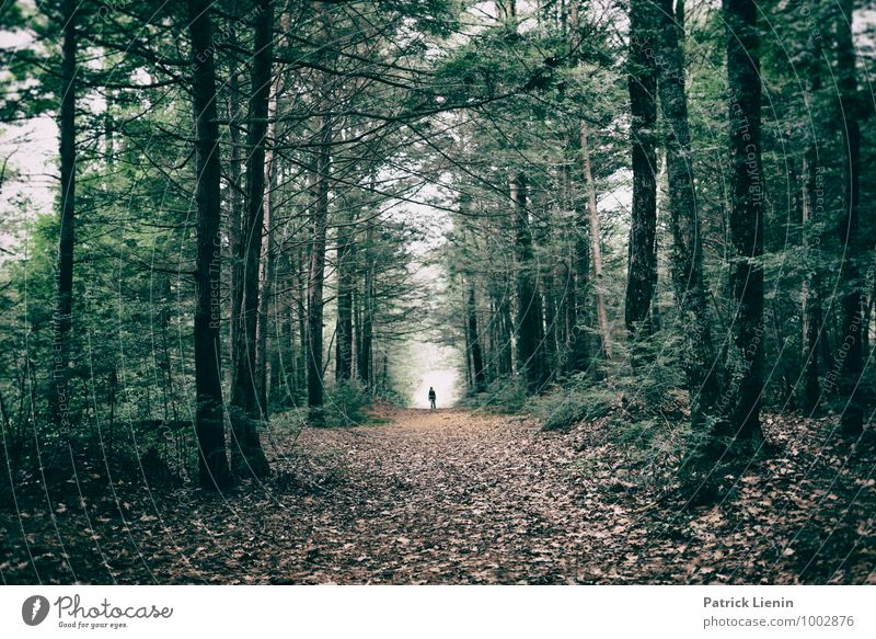 Human being Nature Vacation & Travel Plant Tree Relaxation Landscape Calm Forest Environment Life Autumn Freedom Contentment Weather Hiking