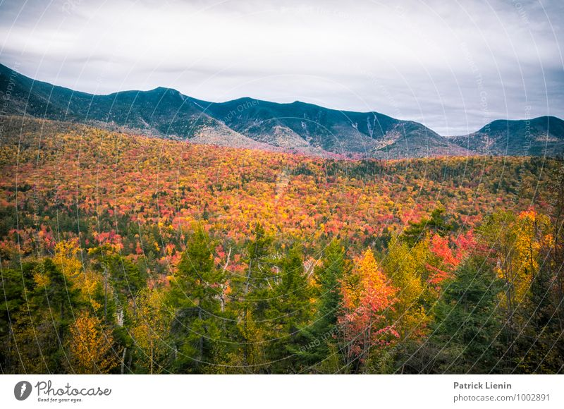 Case Foliage Well-being Contentment Senses Relaxation Calm Vacation & Travel Trip Adventure Far-off places Freedom Mountain Hiking Environment Nature Landscape