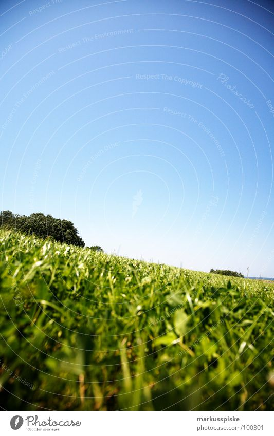 summer meadow Meadow Grass Green Juicy Blade of grass Summer Sky Beautiful weather Sun Far-off places Landscape Idyll